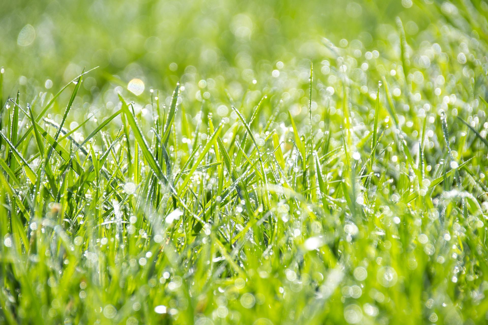 grass-1326759_1920